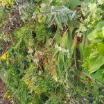 Green vertical system Parete verde