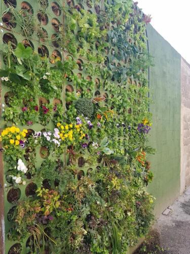 Parete verde Green Vertical system